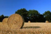 Sistemi automatizzati di pellettizzazione e essiccazione per il settore agricolo (paglia)
